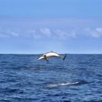 Despierta tus emociones navegando con delfines
