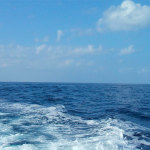 Cebos y equipos adecuados para la pesca desde barco